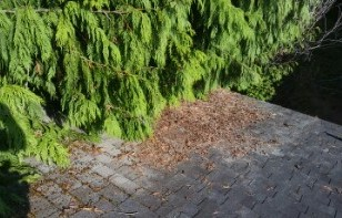Cleaning Moss Off of Roof Shingles trim tress away