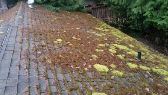 Cleaning Moss Off of Roof Shingles