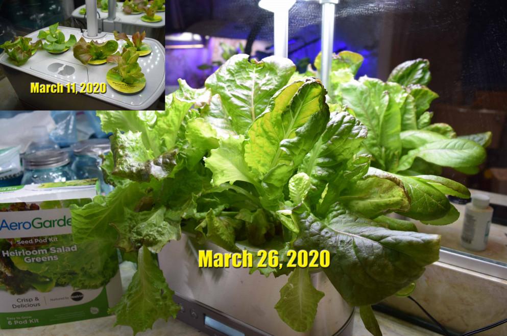 Mar 11 - Mar 26 2020 Aerograden