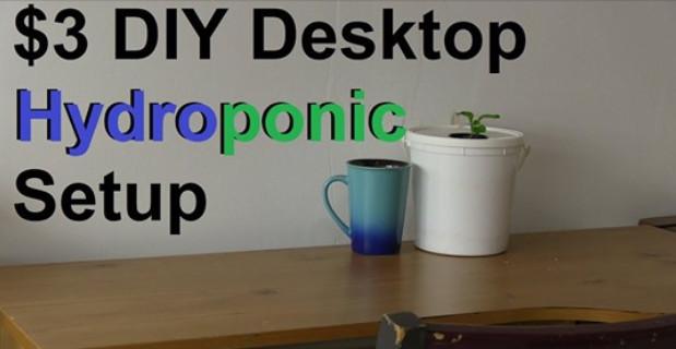 $3 DIY Desktop Hydroponic Setup