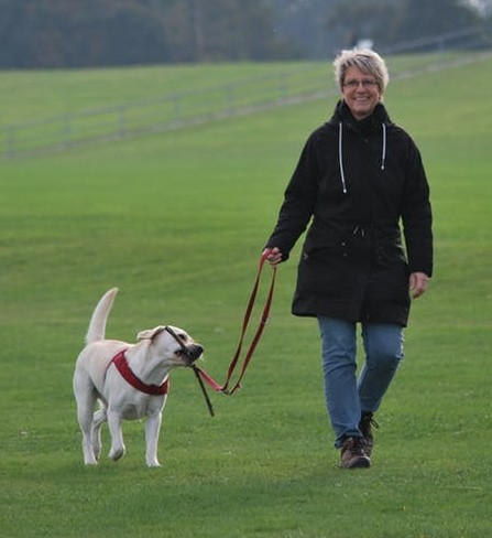walking your dog to help lose the belly fat