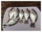 Spring crappie fishing tips