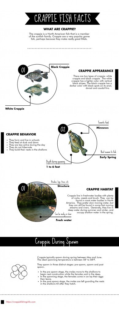 crappie fish facts infographic