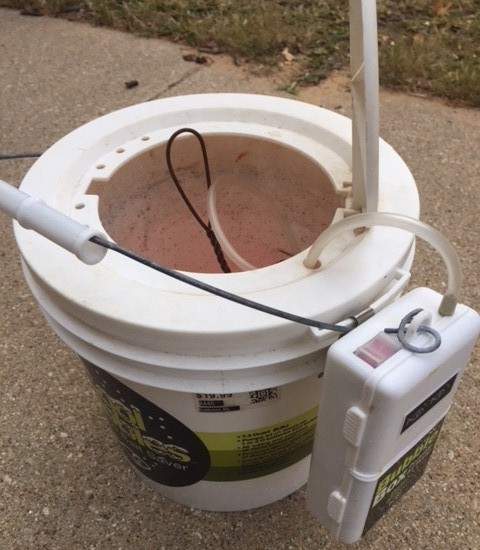 insulated minnow bucket