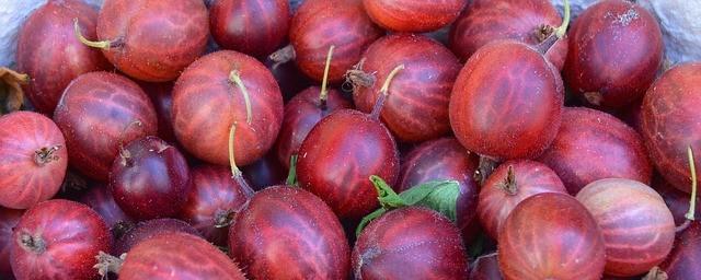 super immune boosting foods gooseberry