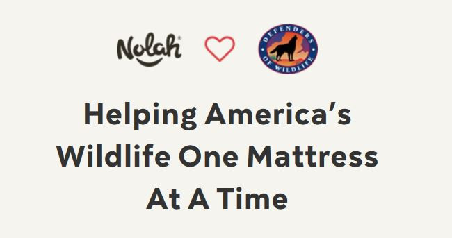 adopt an animal with every nolah mattress purchase