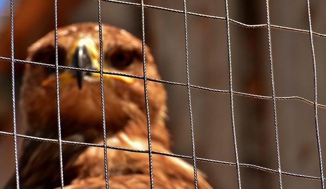 keeping aviary birds