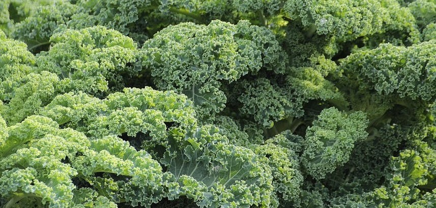 how is kale good for you