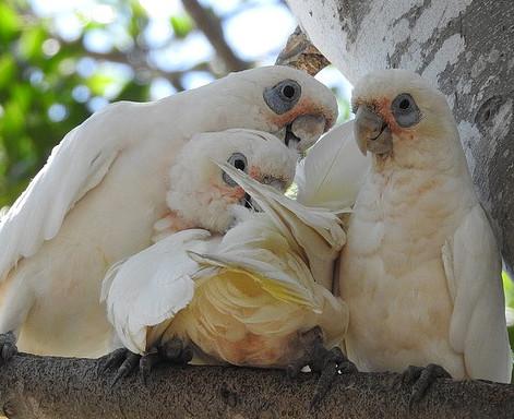 breeding birds for profitonlinefromhomebusiness@gmail.com