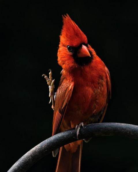 parasites in birds