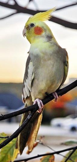 healthy bird treats