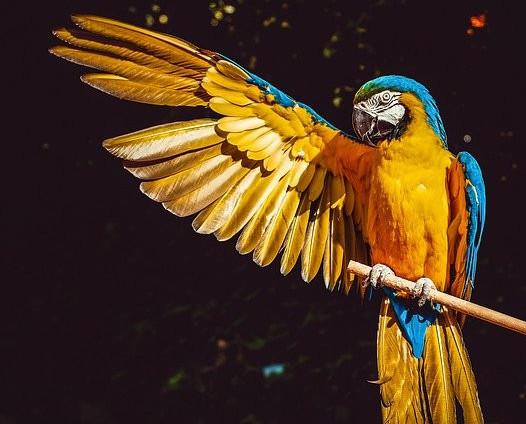exotic bird shows