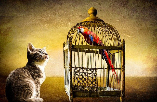 where to put a bird cage