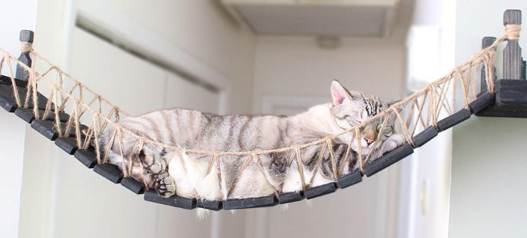 epic roped cat bridge for kids