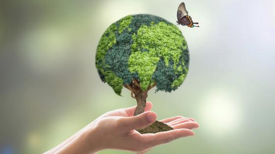 Environmental Health and Wellness