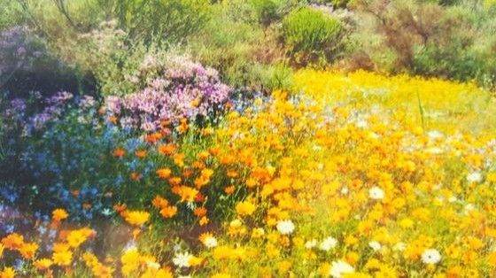 The floral kingdom of the Western Cape
