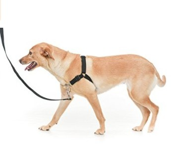 No pull harnesses are far more effective to control pulling in your dog