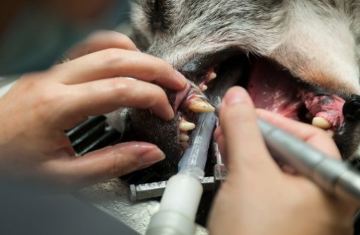 It's not nice to have to put your dog through dental surgery