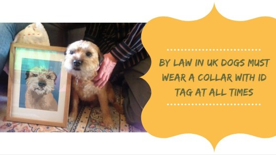 In UK collar with ID tag is compulsory