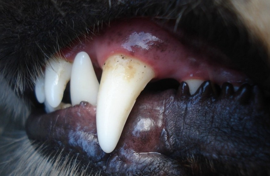 Brushing your dog's teeth daily is important if you want to avoid this!