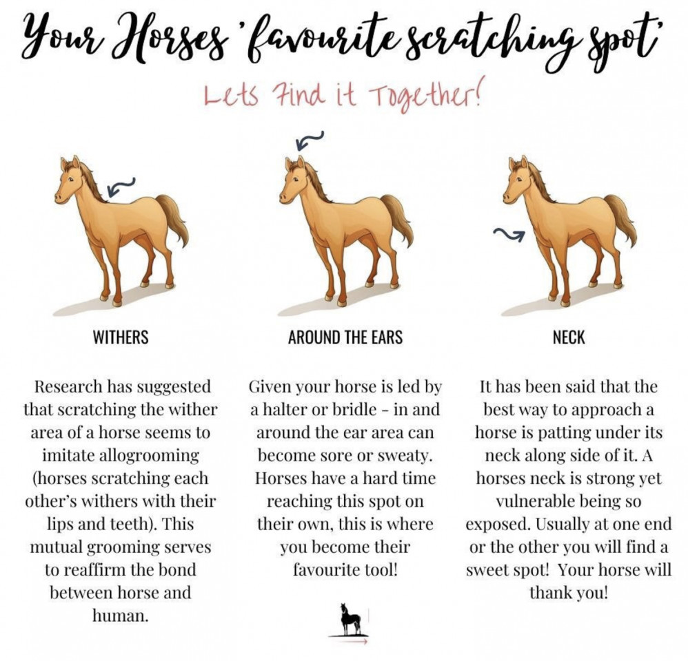 How to Bond with Your Horse by Finding Your Horse's Itchy Spot