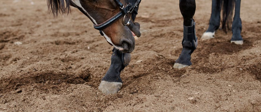Horse Hoof Polish and Dressing: To Use or Not to Use? 7