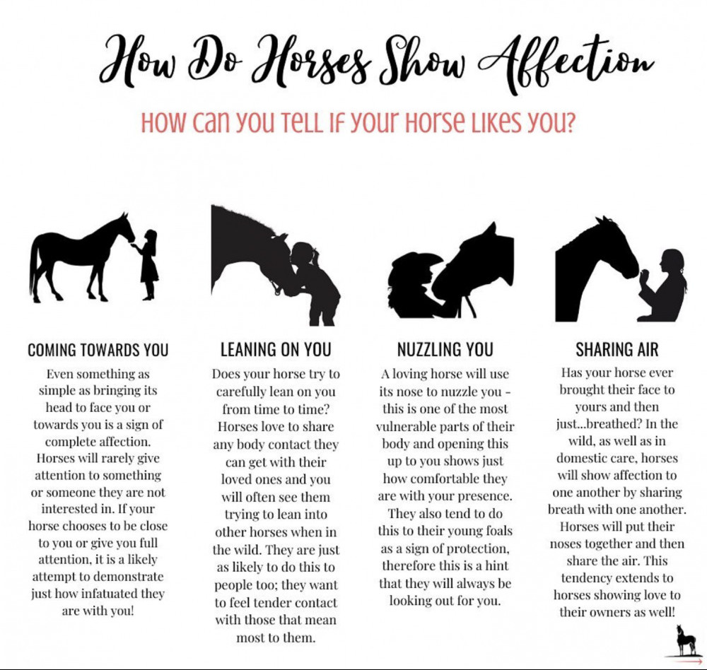 How Do Horses Show Affection? 4 Ways To Know You've Bonded With Your Horse