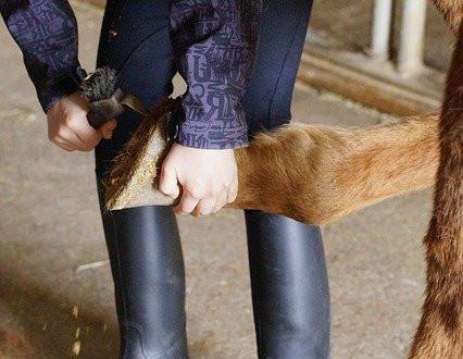 Horse Hoof Polish