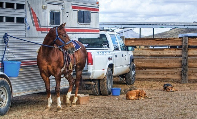 owning your first horse - do you need a truck?