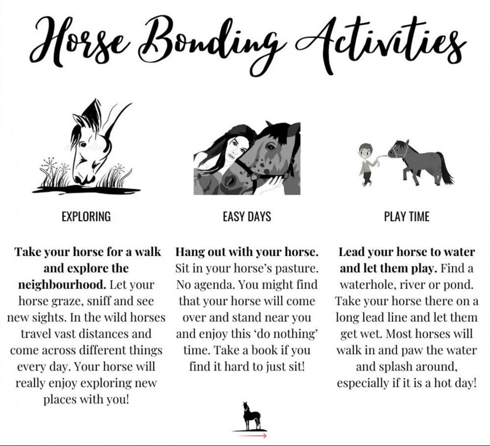 3 horse bonding exercises