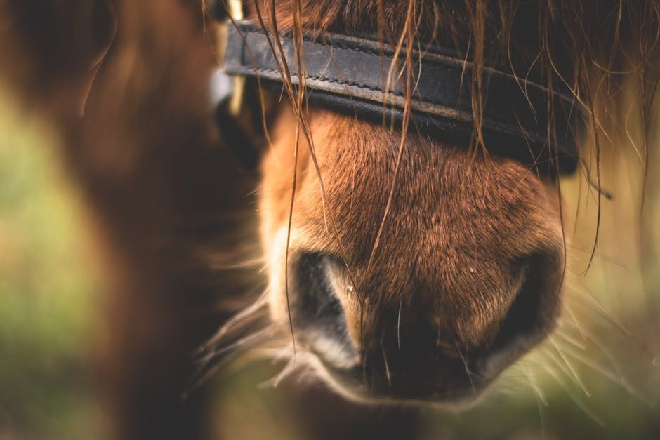 10% of all equestrian boots and bridles profits go to horse rehabilitation