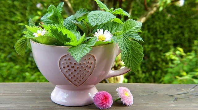 a cup with herbs
