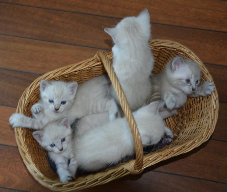 Older Kittens