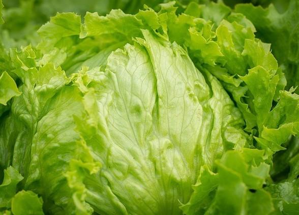 Iceberg Lettuce 95.6% Water
