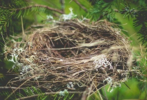 What is the Empty Nest Syndrome
