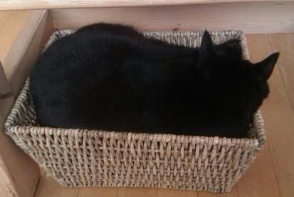 Migo on Newspaper Basket