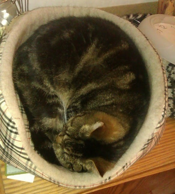 Tabby In A Non-Fitting Cat Bed
