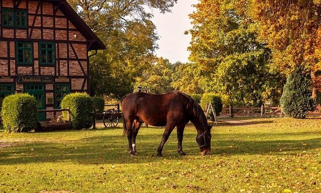 landscaped horse farm
