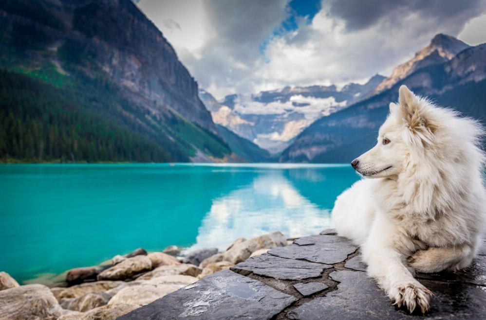 dogs and travel are 2 ideas for niches that need to be narrowed down