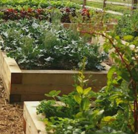 multiple raised beds vegetable garden