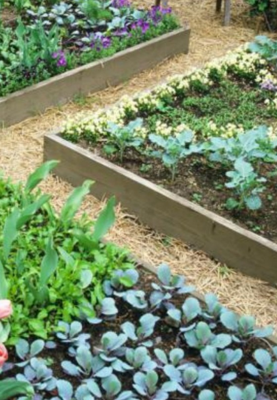three raised beds with vegetables