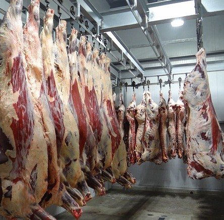 raw meat hanging in slaughter house
