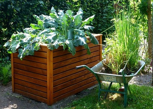 waist high raised bed garden