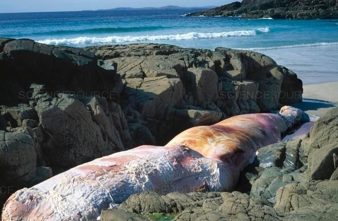 A dead whale on the beach