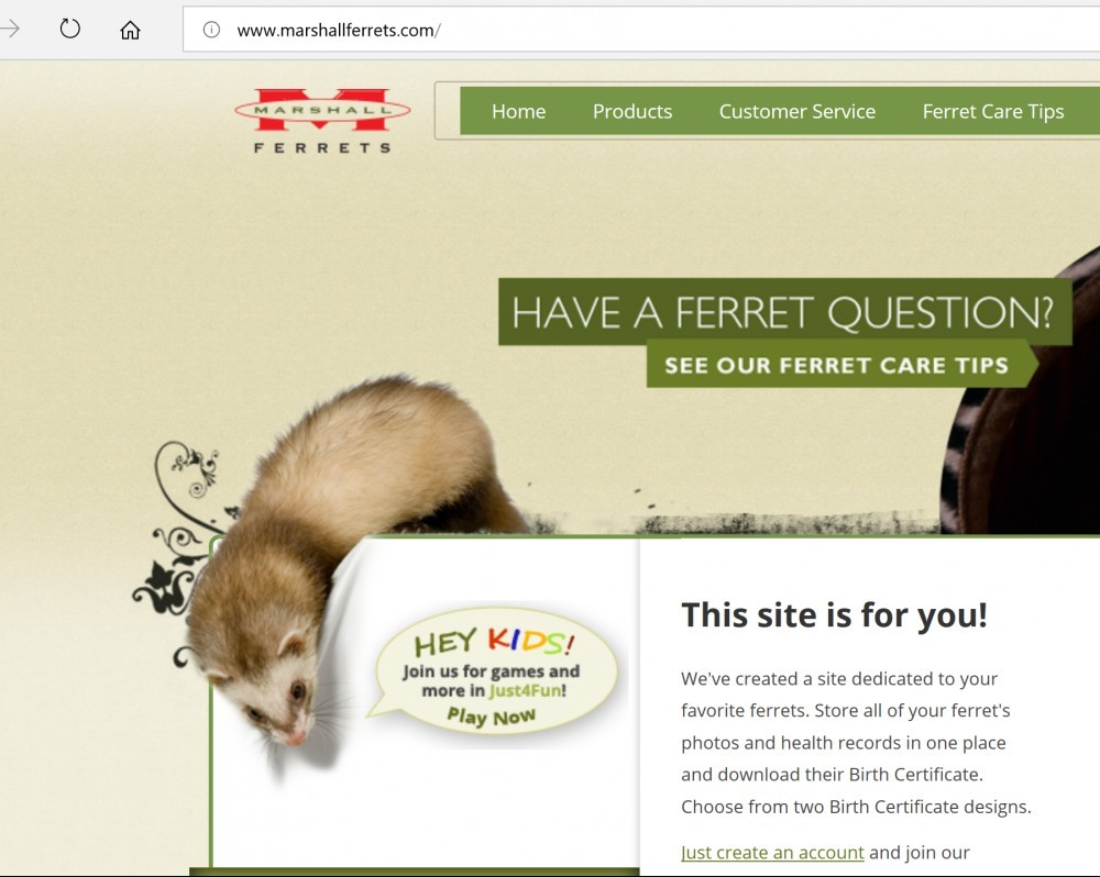 Where Can I Get A Ferret Places That Sell Ferrets