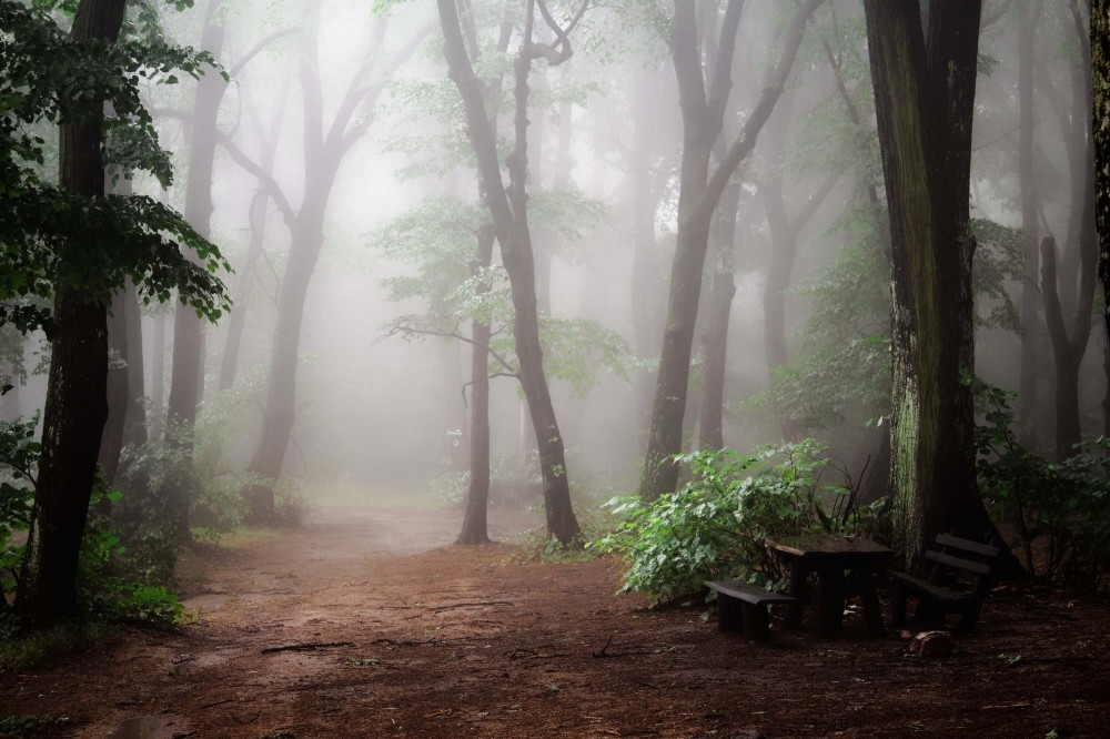 Misty Woods Prompt