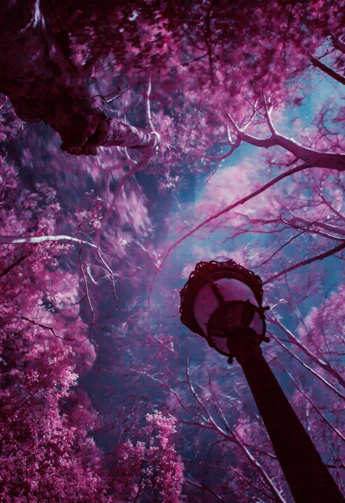 Narnia Prompt