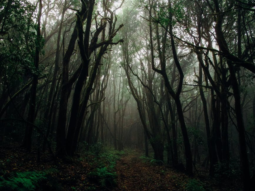Misty Moors Prompt