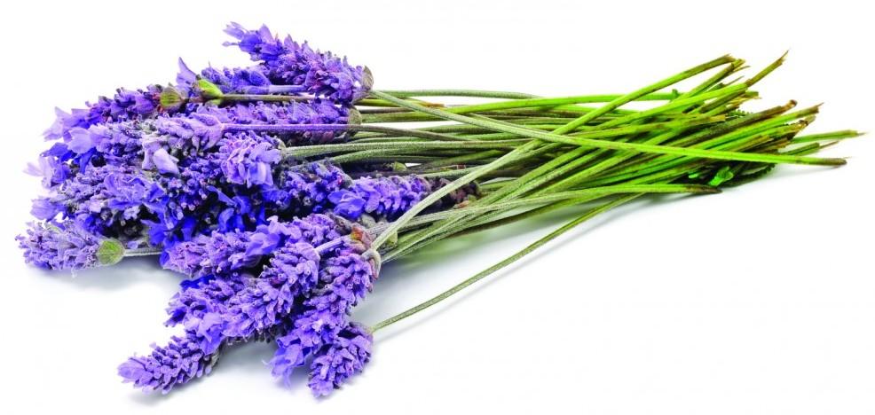 Lavender Sprig