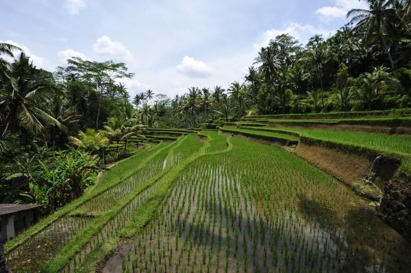 Bali Population in 2018